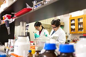 Researchers work in environmental engineering lab.