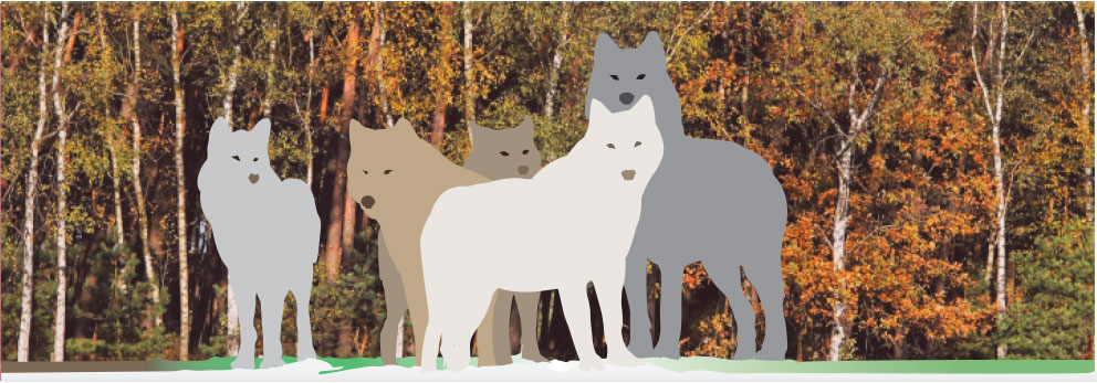 Graphic: wolves