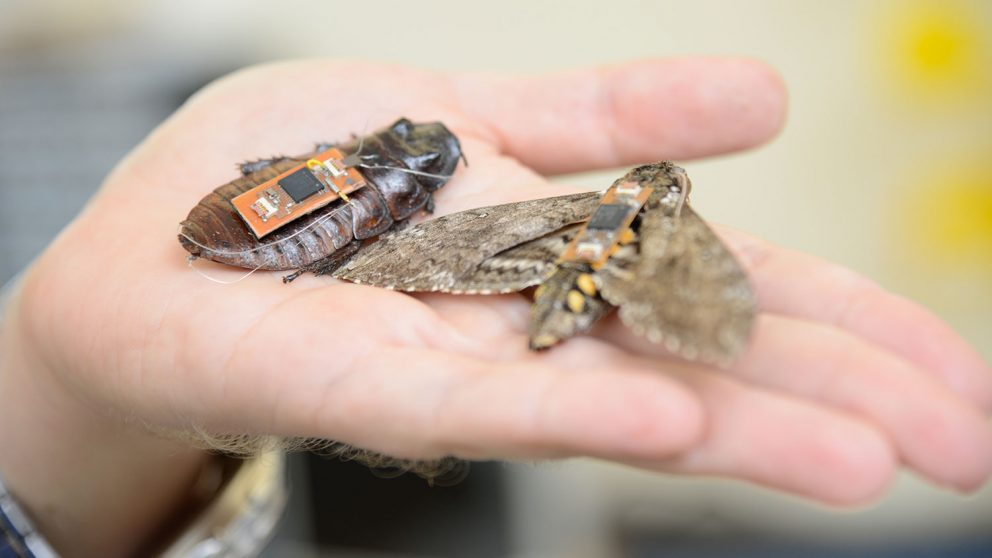 insect cyborgs or biobots
