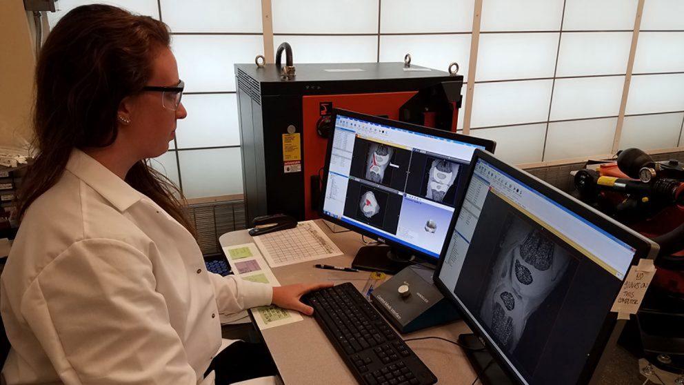 Stephanie Cone examines MRIs of pig knees.