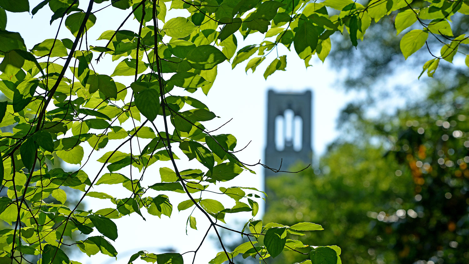 NC State bell tower in the spring