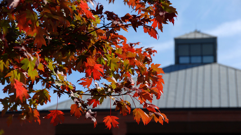 Fall on Centennial Campus