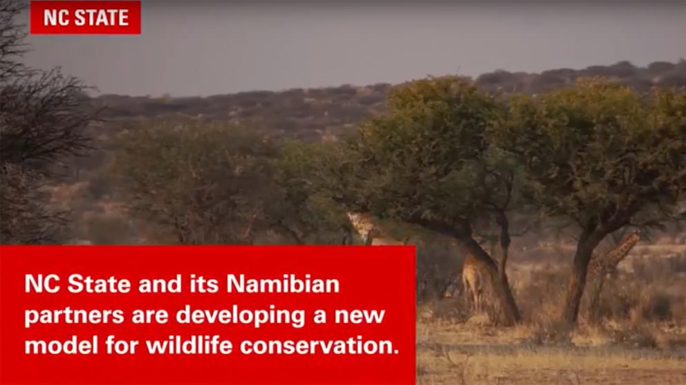NC State and its Nambian partners are developing a new model for wildlife conservation.