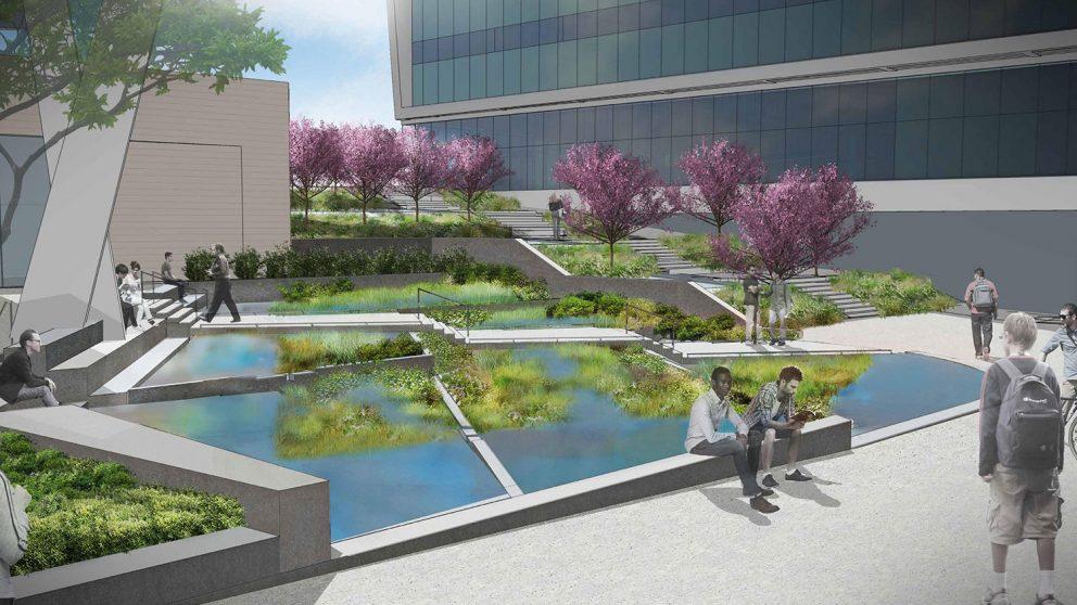 wetland rendering