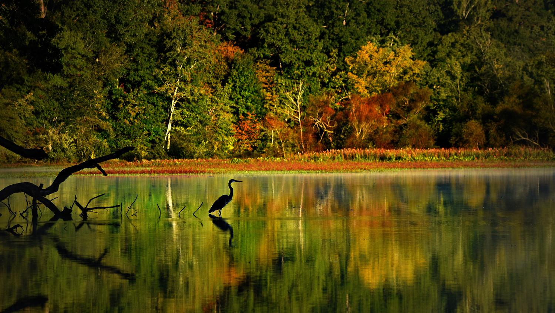 A heron awaits an early breakfast in Lake Raleigh.