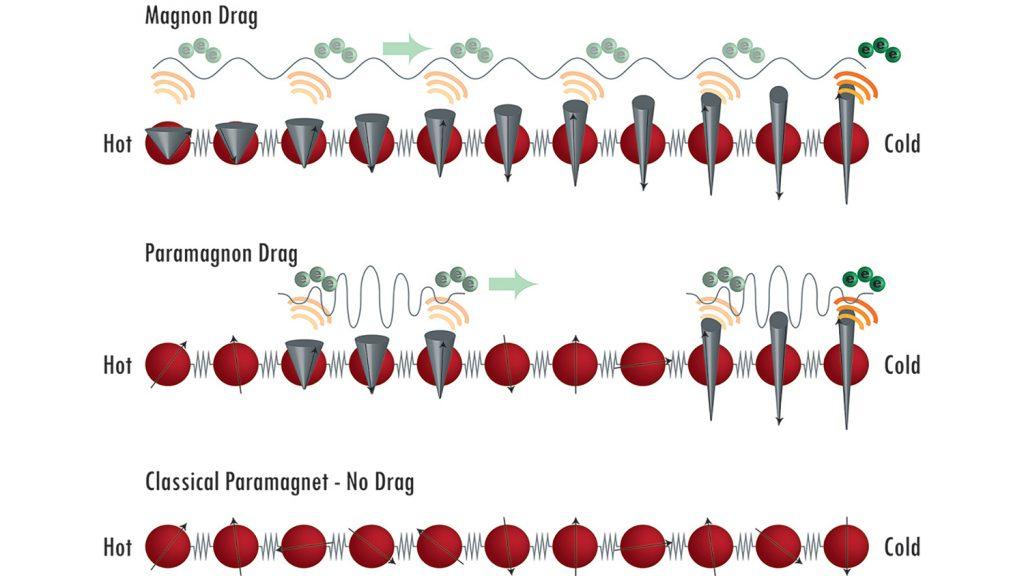 Showing magnon versus paramagnon drag