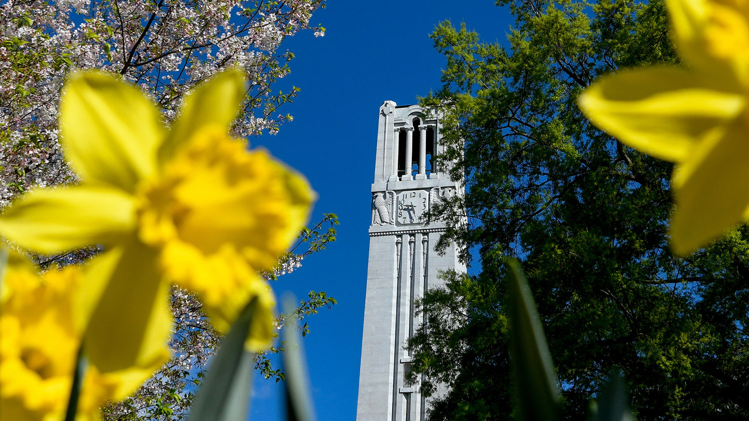belltower-in-spring